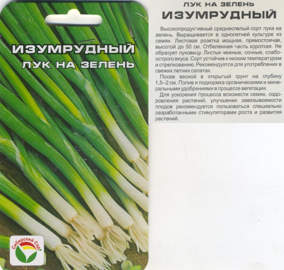Сорта лука на зелень – что лучше посадить? + видео