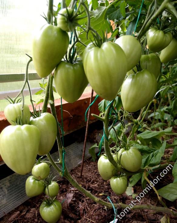 Описание сердцевидного томата чудо уолфорда и особенности выращивания. томаты чудо земли, чудо уолфорда, чудо внуковой