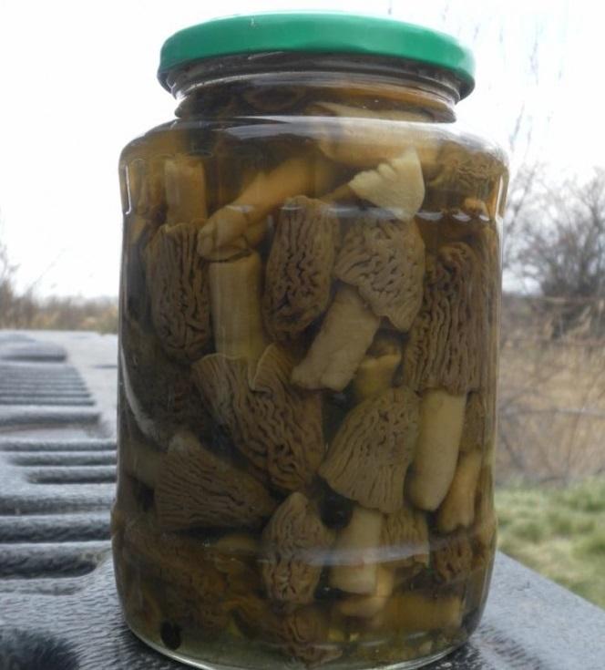 лучшие рецепты маринованных моховиков