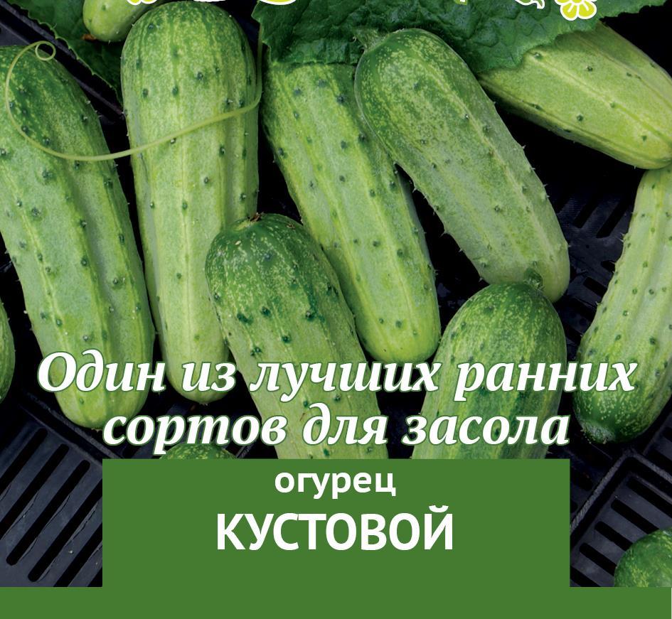 Огурец конкурент: описание сорта, характеристики и выращивание в открытом грунте