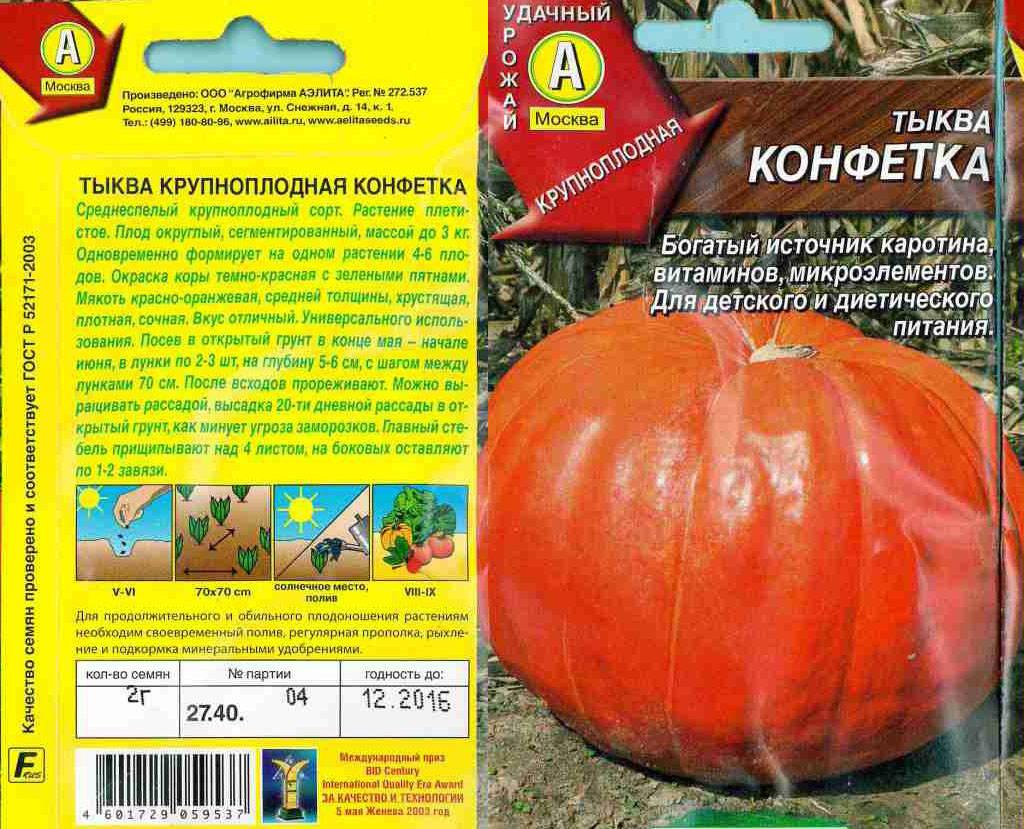 Лучшие сорта тыквы для открытого грунта; польза плода и его разновидности, описание