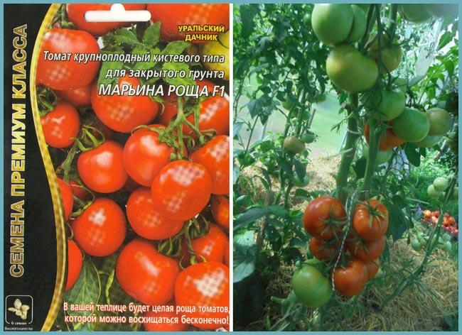 Описание гибридного сорта томата торквей и рекомендации по выращиванию растения