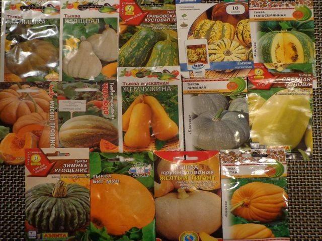 Тыква улыбка: описание скороспелого крупноплодного гибридного сорта, нюансы выращивания и отзывы садоводов