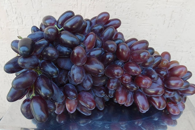Виноград байконур: сверхранний сорт с красивыми вкусными ягодами   садоводство и огородничество