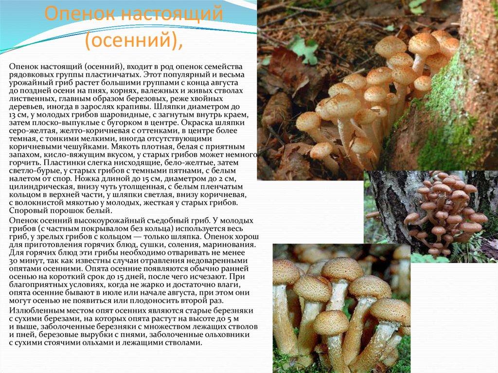Какие грибы, где растут и когда: места и сроки плодоношения