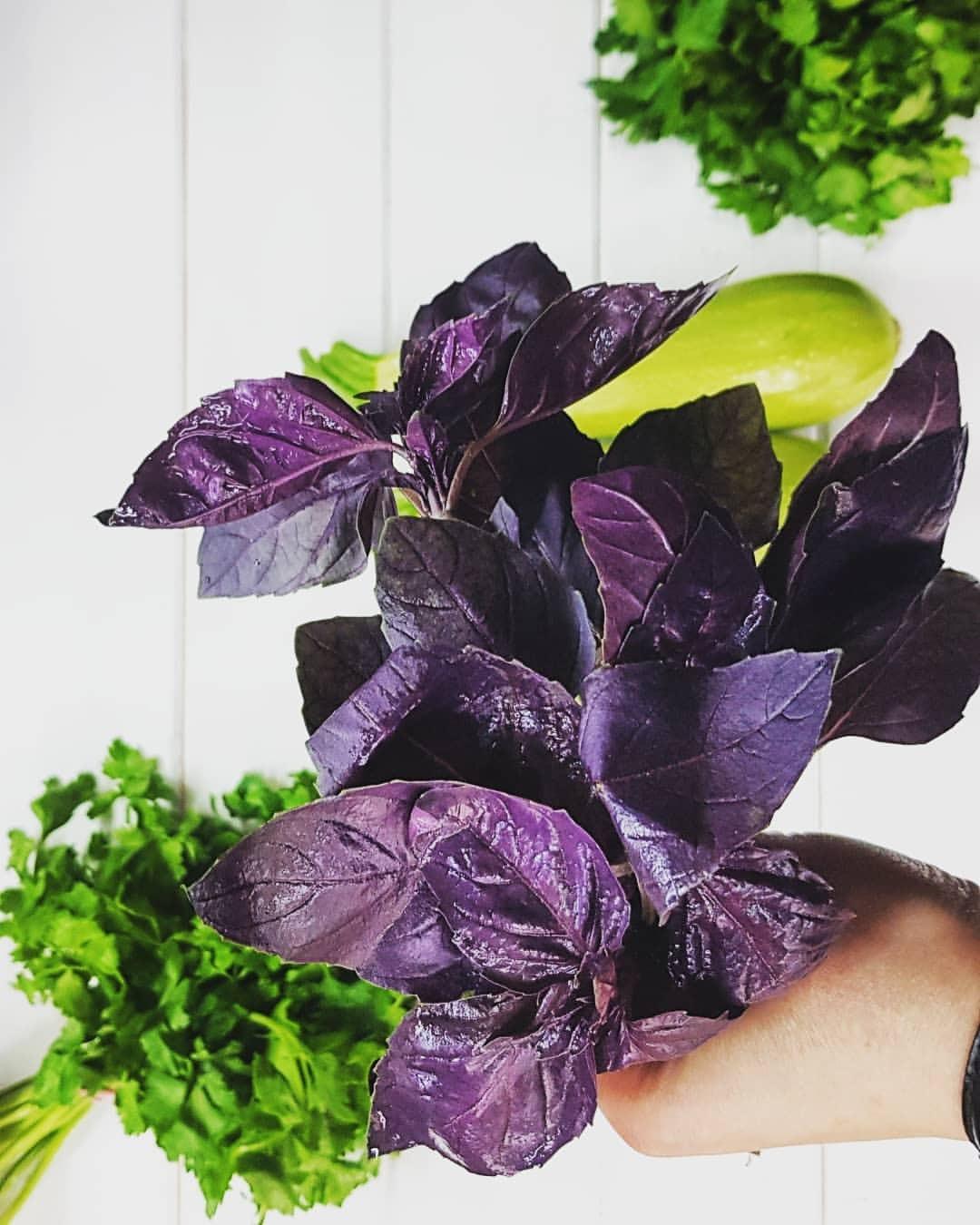 Базилик зеленый и фиолетовый