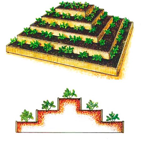 Пирамида для клубники своими руками: схема устройства, пошаговые фото и чертежи с размерами - дом и участок