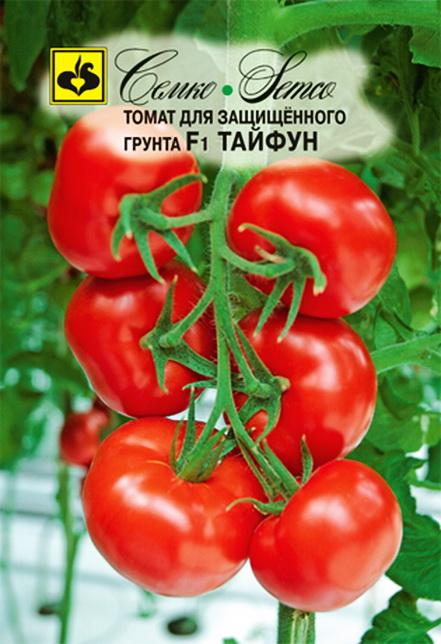 Высокоурожайные, вкусные и простые в уходе томаты «стреза» для выращивания в открытом грунте или теплице