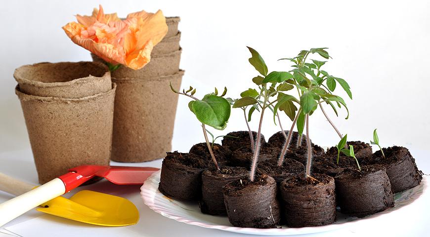 Торфяные таблетки для рассады: как пользоваться, инструкция по посадке семян - почва.нет