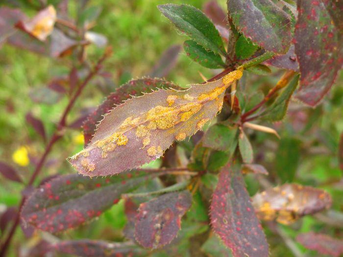 Гипергидроз - как избавиться от мокрых ладоней и стоп?