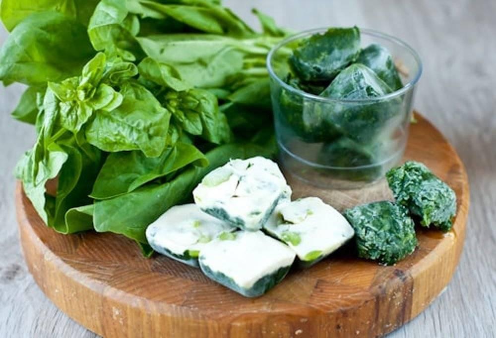 Как сохранить шпинат на зиму свежим в домашних условиях
