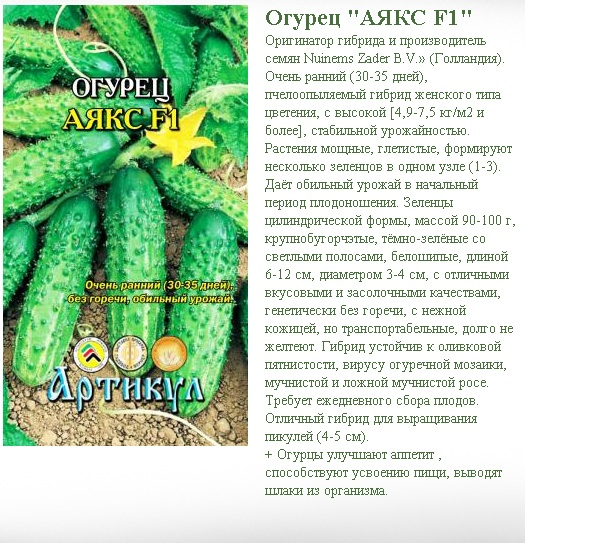 Описание огурца Аякс и рекомендации по выращиванию гибрида