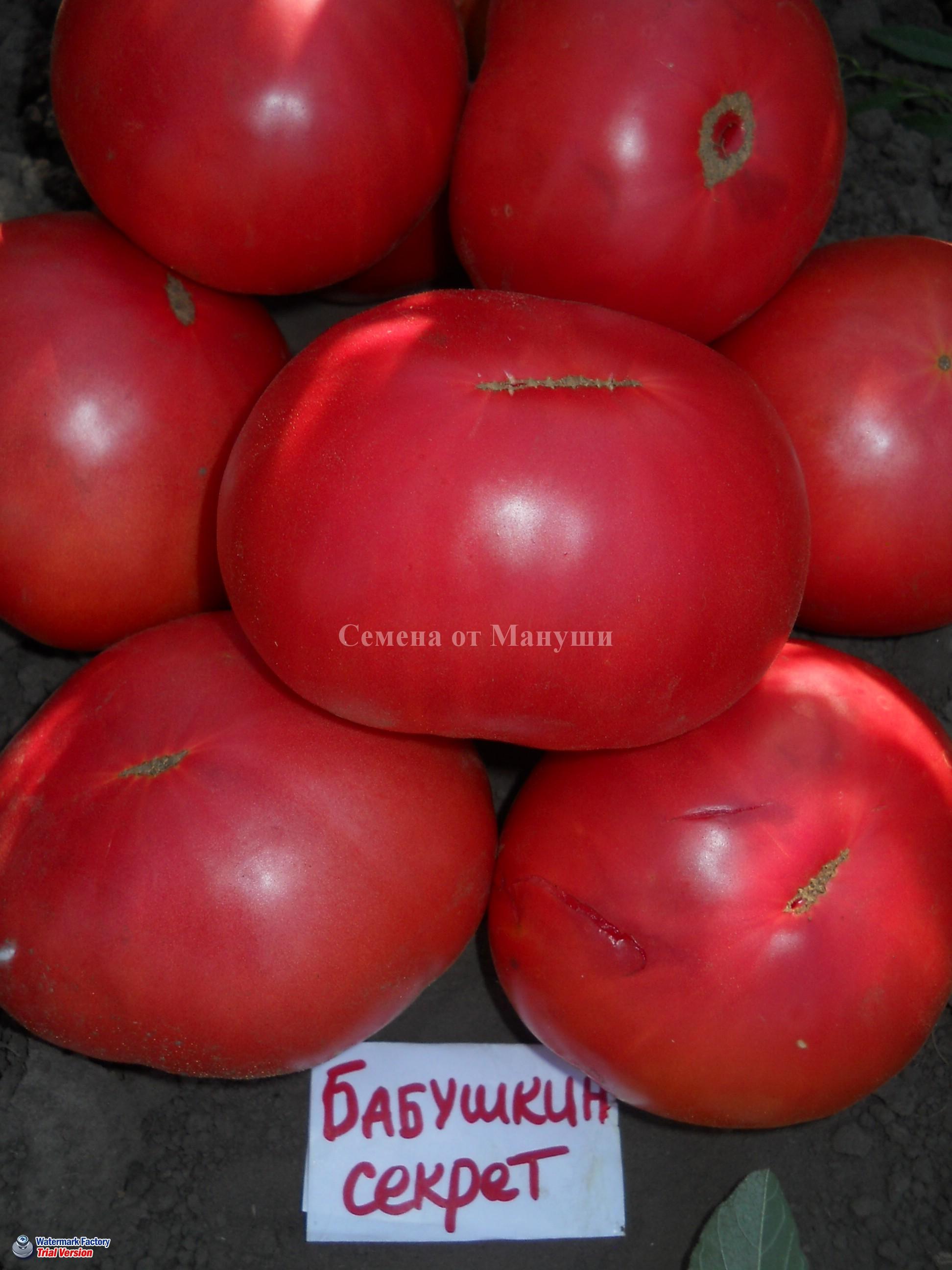 Сорт томатов бабушкин секрет: описание сорта и фото, характеристика русский фермер
