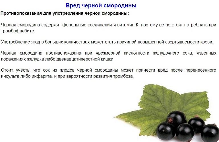 Чем полезна белая смородина: лечебные свойства и противопоказания