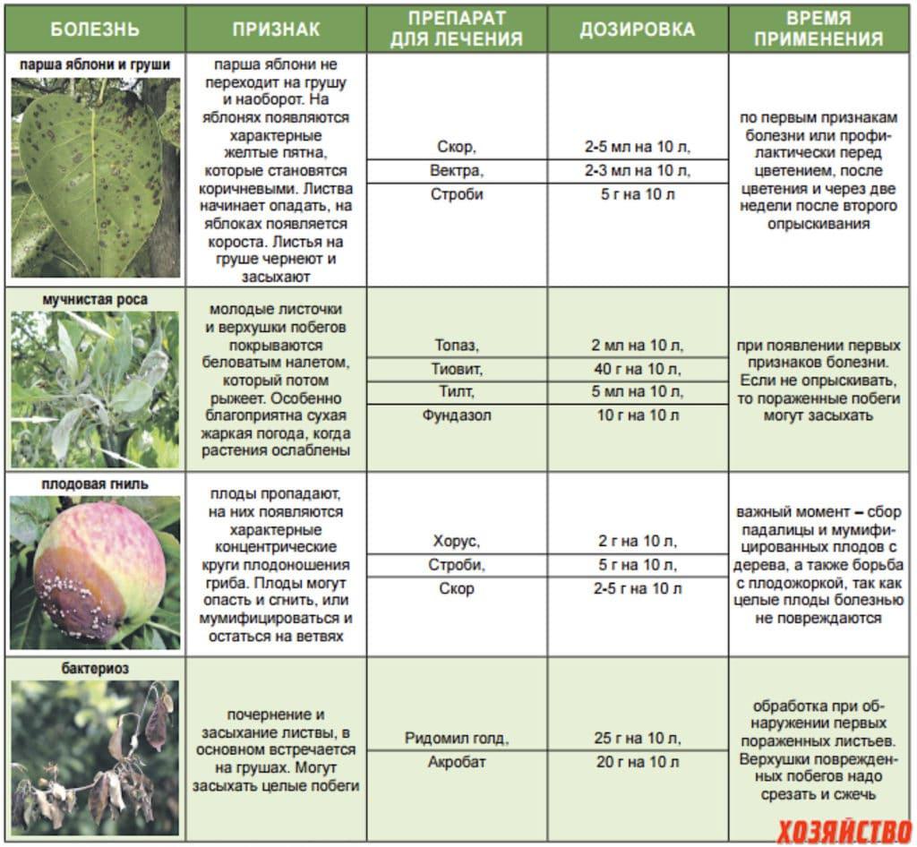 Болезни фундука: причины, симптомы и описание вредителей, меры борьбы