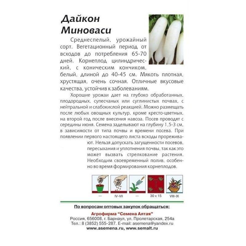 Лучшие сорта дайкона. описание сортов, выращивание и уход, фото и видео