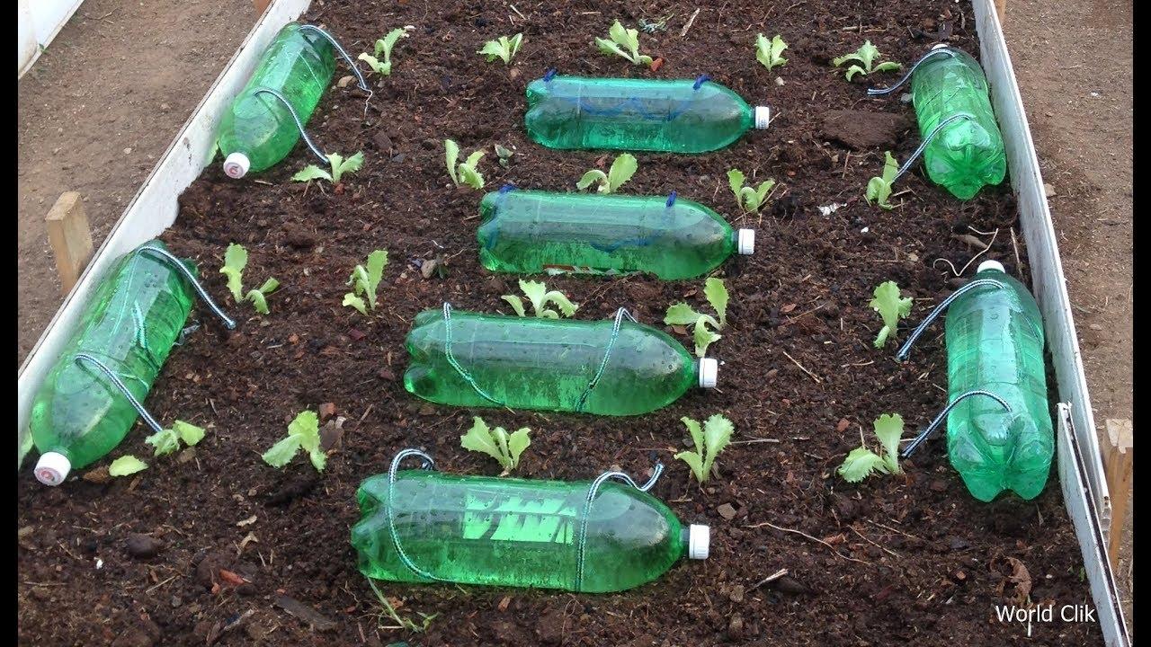 Капельный полив из пластиковых бутылок овощей и других растений