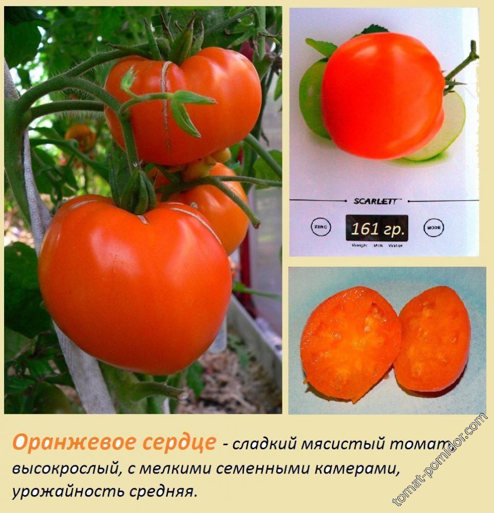 """Томат """"оранжевое сердце"""": характеристика и описание сорта, отзывы"""