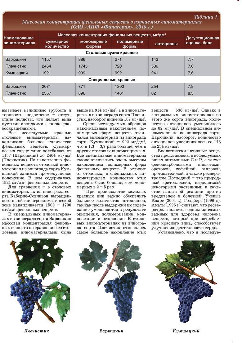 """Виноград """"шардоне"""": характеристика, применение и полезные свойства"""