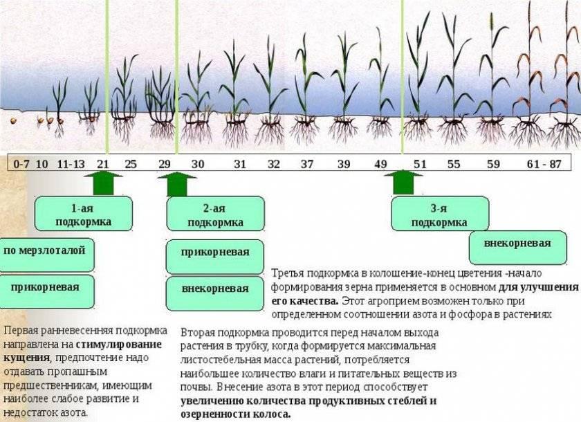 ✅ о подкормке ирисов после цветения (чем хорошо удобрять растения в июле) - tehnomir32.ru