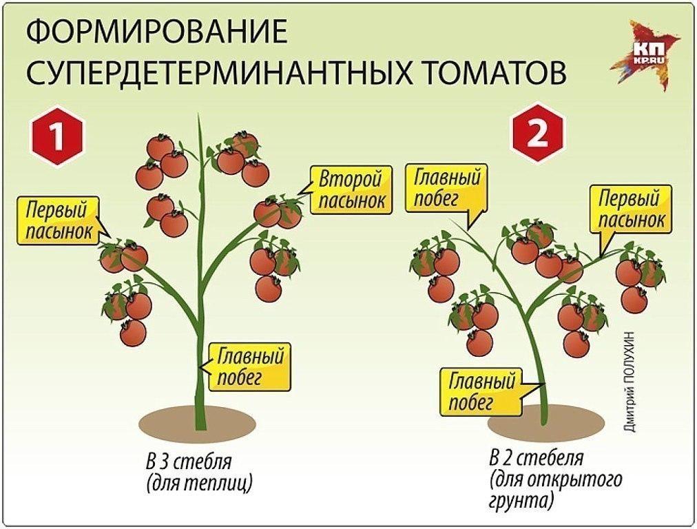 Как пасынковать томаты в открытом грунте: подробное описание, схемы и таблицы
