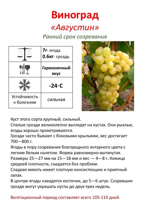 Виноград красень: описание сорта и фото, урожайность, отзывы