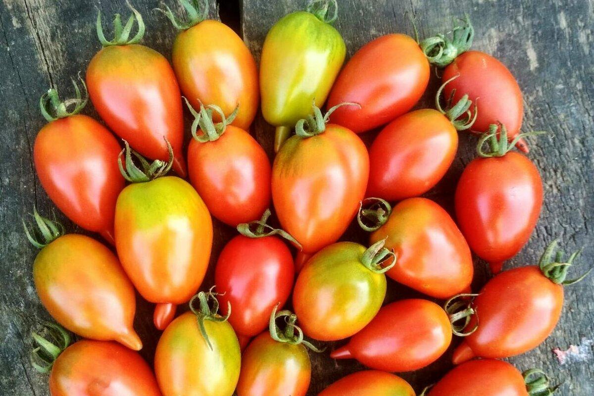 """Томат """"юбилейный тарасенко"""": отзывы, фото помидоров, характеристика и описание сорта, его преимущества и недостатки"""