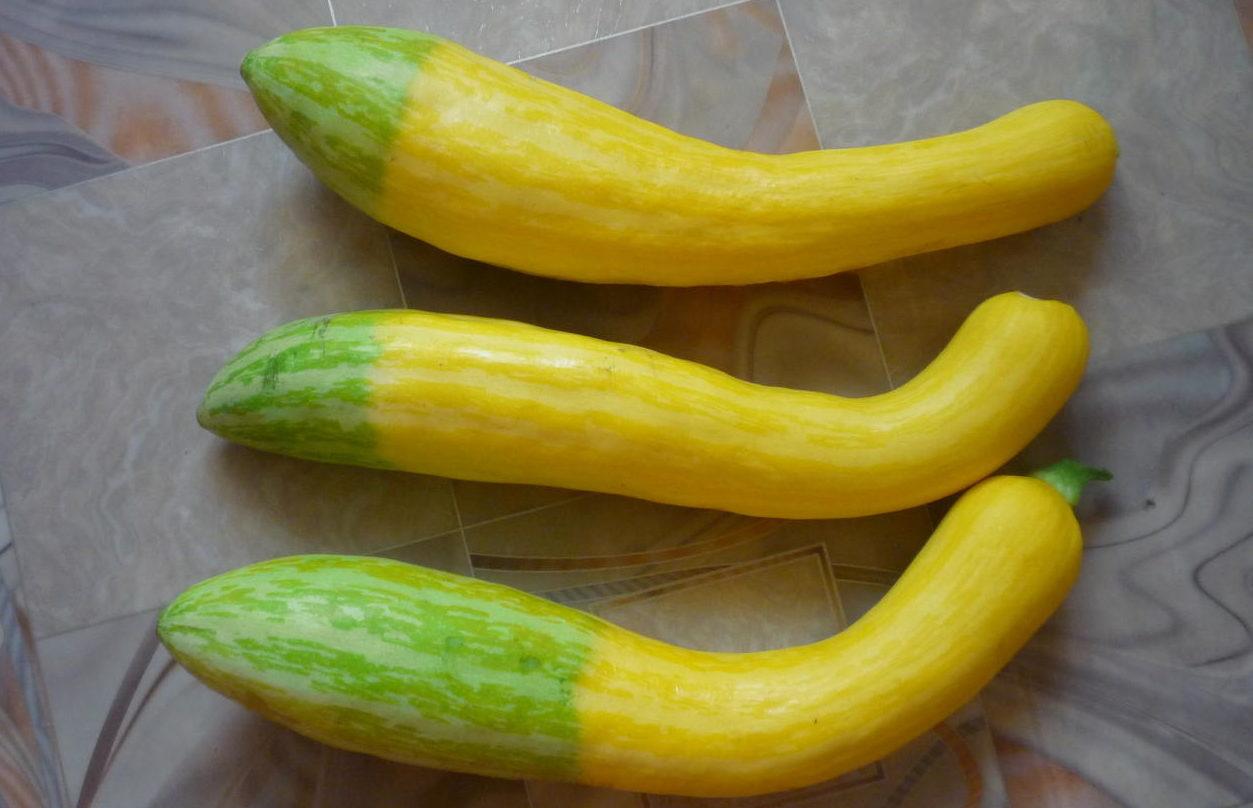 Клубника зефир: описание сорта, отзывы садоводов, фото