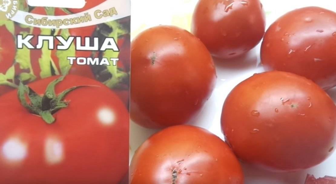 Клуша томат: характеристика и описание сорта помидоров, посадка и уход, урожайность