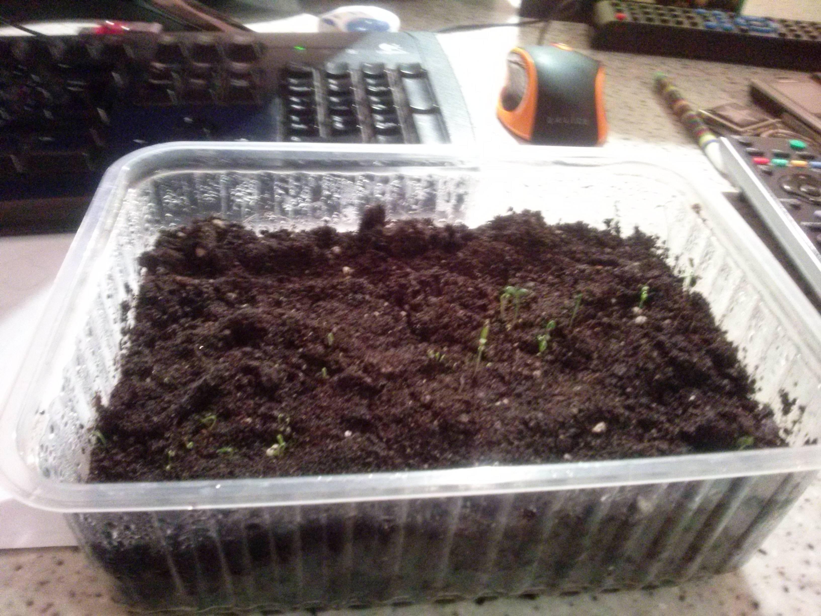 Нюансы подготовки семян томатов к посеву на рассаду в домашних условиях и советы, как самому собрать материал