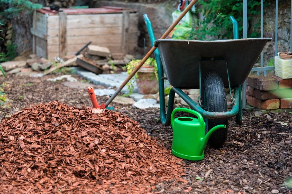 Защищаем сад: мульчирование яблонь и других плодовых деревьев