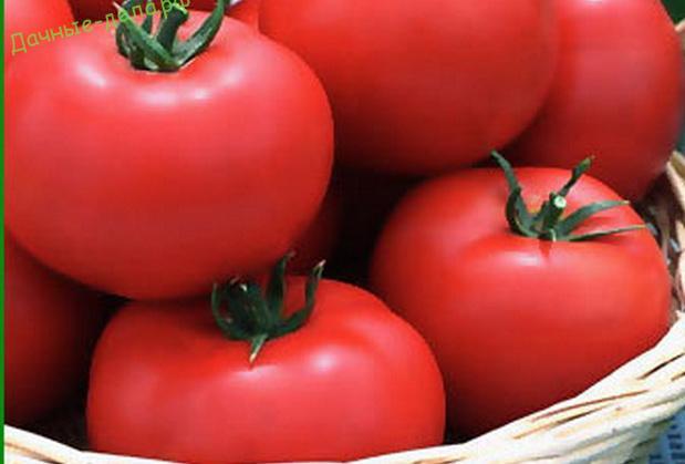 Описание сорта томата ягуар, выращивание и урожайность – дачные дела