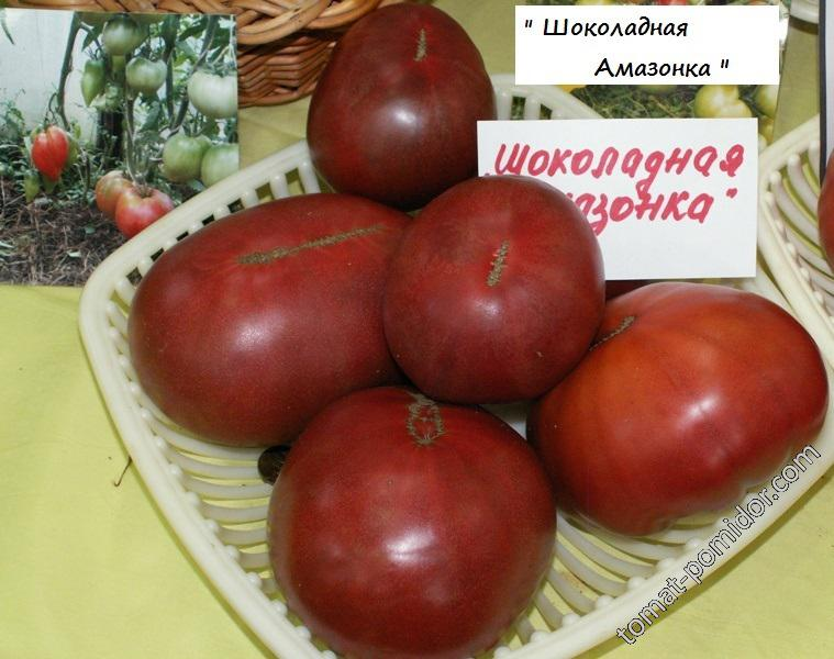 Описание сорта томата шоколадная амазонка, его характеристика и урожайность - всё про сады