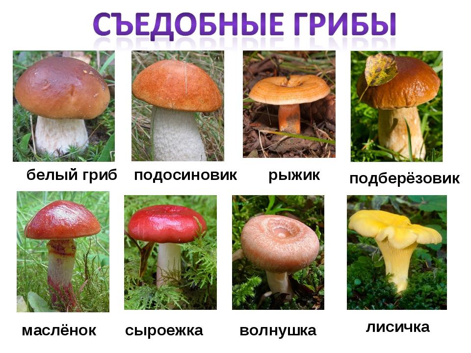 Какие грибы растут в подмосковье в октябре 2020 года | общество | селдон новости