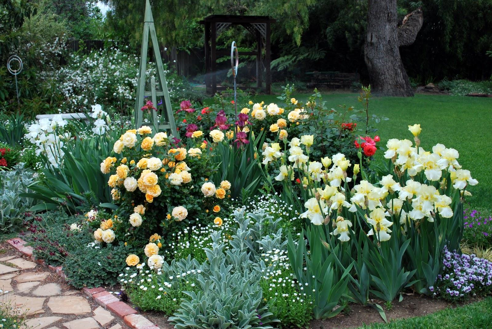 ᐉ ирисы с какими цветами сочетаются на клумбе - godacha.ru