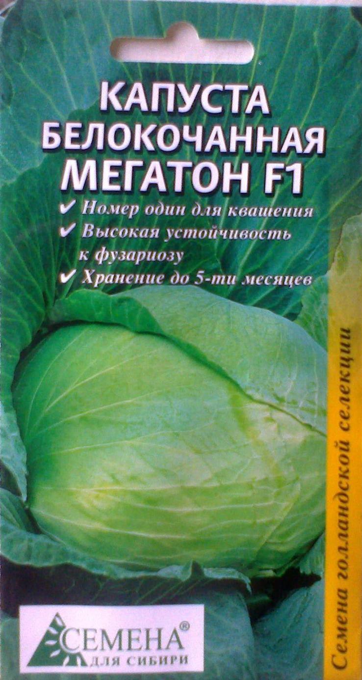 Капуста мегатон: история, описание и характеристики белокочанного сорта + особенности выращивания и отзывы огородников