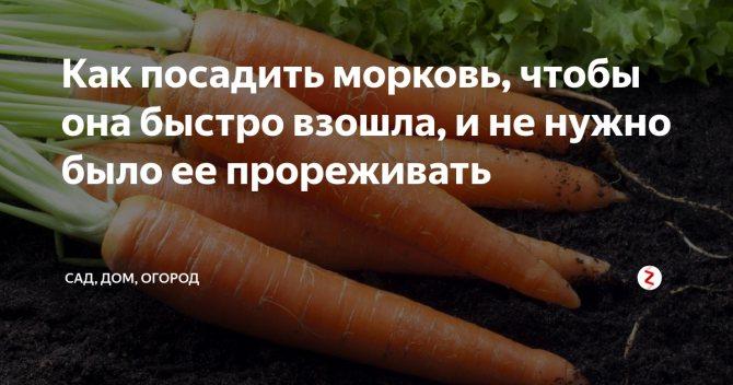 Как посадить морковь, чтобы быстро взошла и её не прореживать