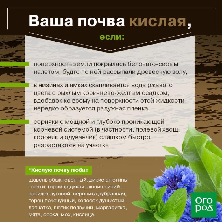 Почва для цитрусовых в домашних условиях
