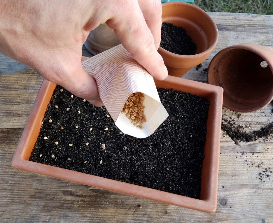 Подготовка семян томатов к посеву на рассаду: способы, фото, инструкции