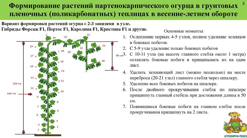 Формирование огурцов в теплице