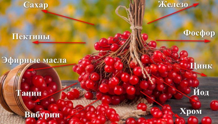 Топ-7 лечебных свойств калины для организма человека