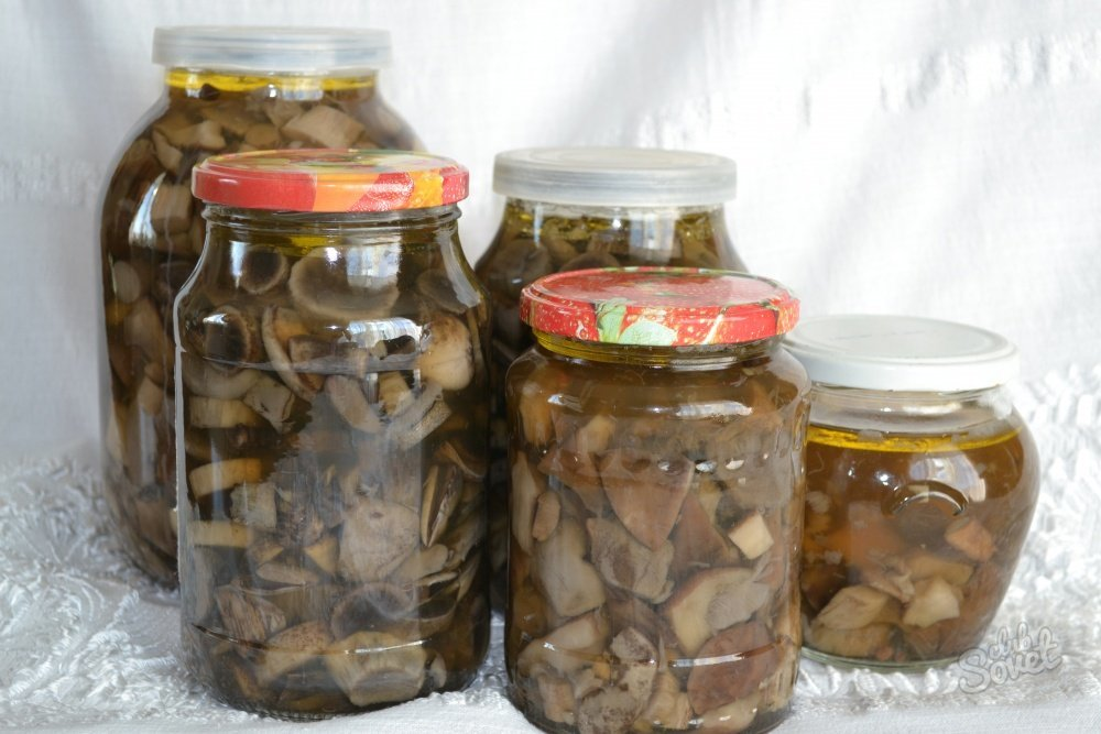 Как мариновать свинушки: рецепты заготовки грибов на зиму