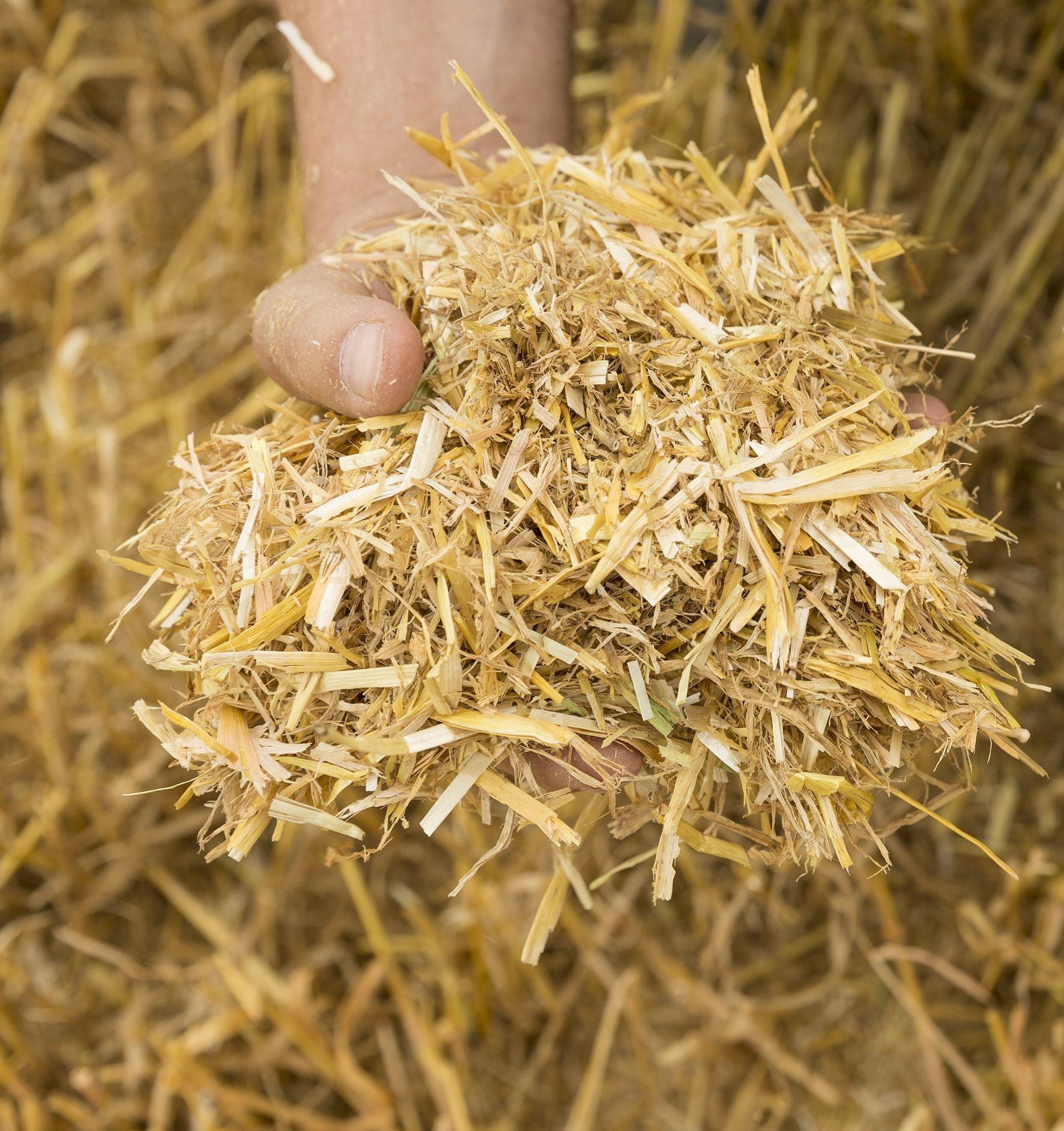 Пищевые отходы как удобрение на огороде: какие очистки полезны пищевые отходы как удобрение на огороде: какие очистки полезны