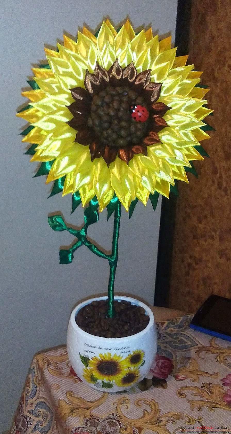 Кофейный топиарий: пошаговый мастер-класс как сделать маленькое декоративное дерево из кофейных зерен