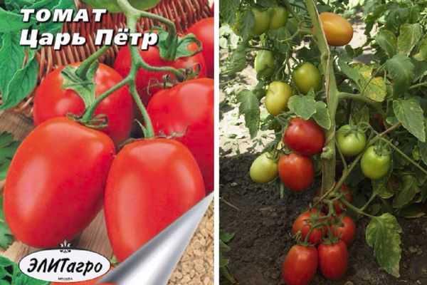 Выращиваем и ухаживаем за томатом «царь-колокол»
