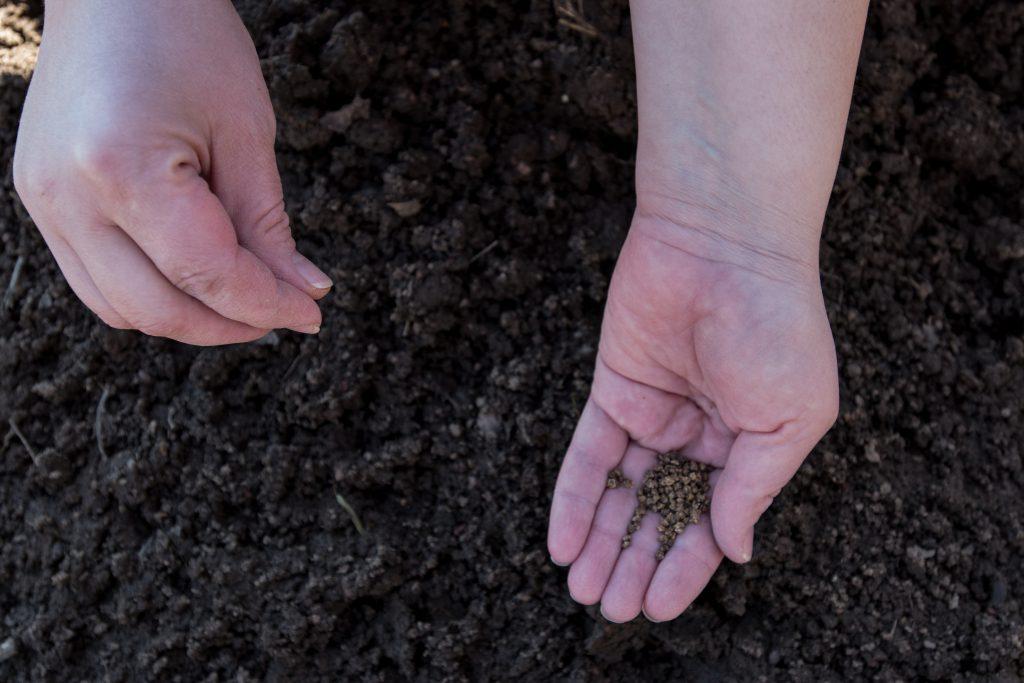 Подготовка семян моркови к посадке весной: способы обработки, правила