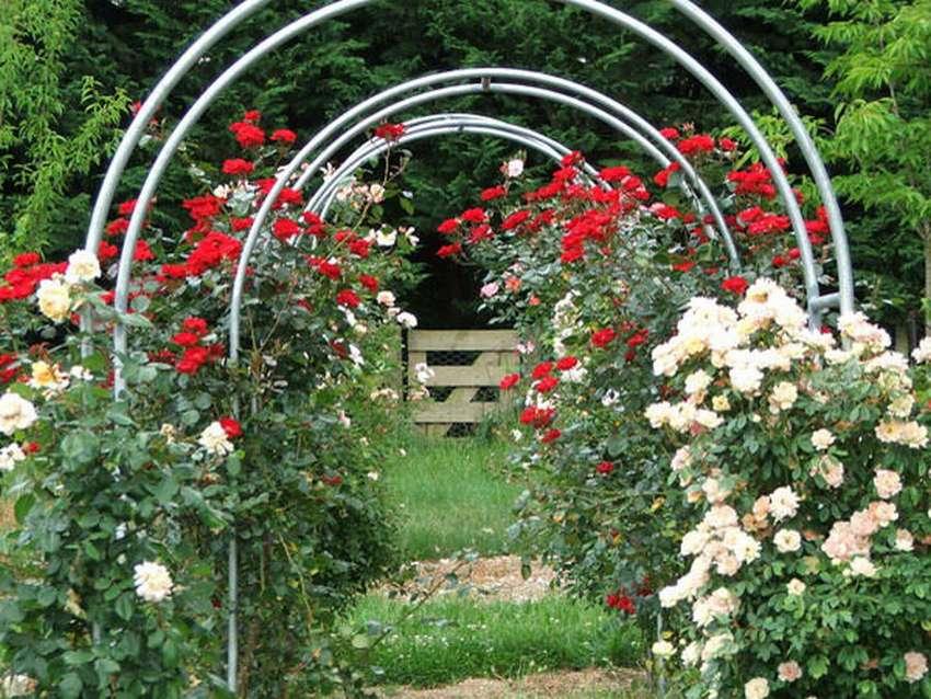 Какими бывают опоры для плетистых роз и как их сделать своими руками?