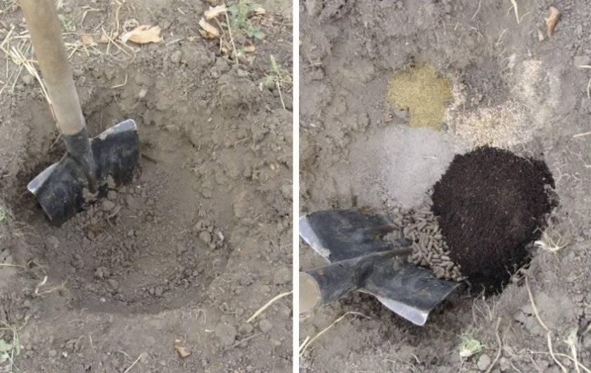 Как сделать почву кислой для голубики: подготовка, правильный состав