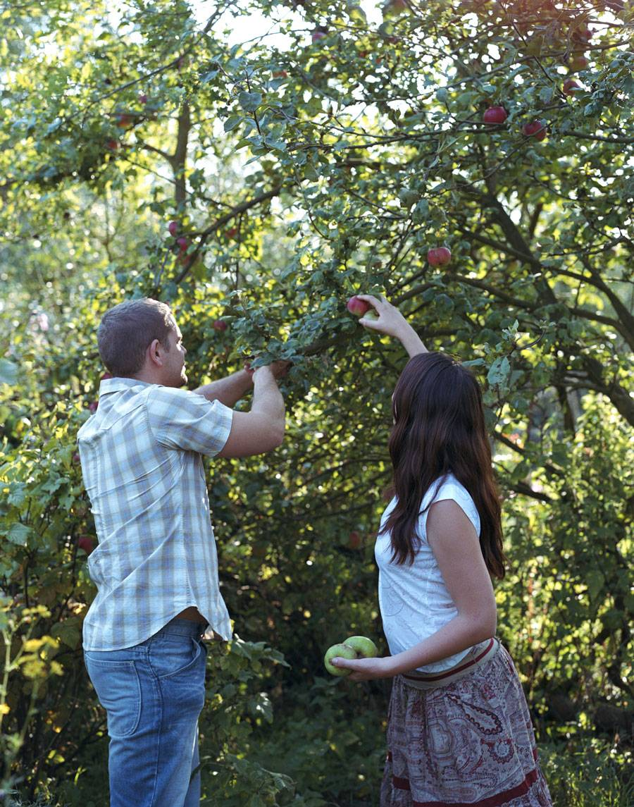 Причины почему яблоня не плодоносит, что делать и как заставить давать урожай