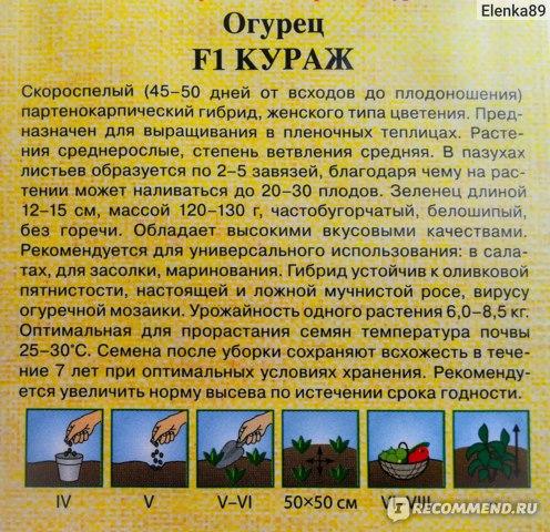 Огурец кураж - описание сорта с фото и видео отзывы посадка и уход
